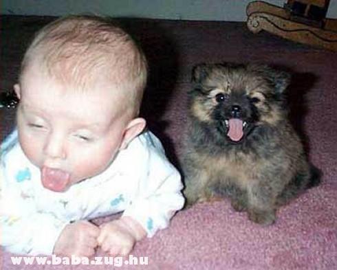 Tomcsi a kiskutyával