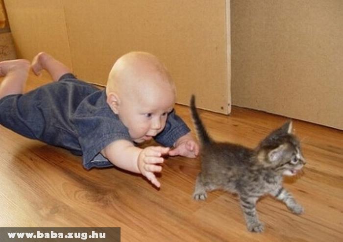Jancsika és a kiscica