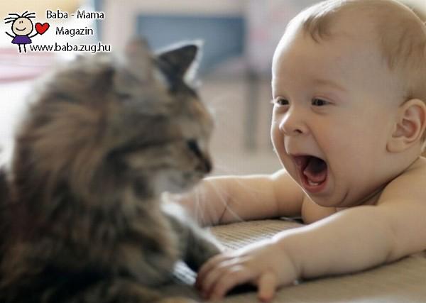 Örülök a macskának