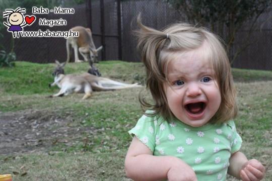 Rémület az állatkertben
