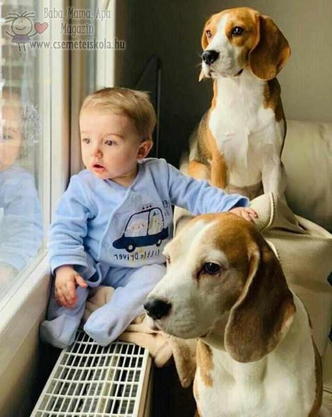 Baba, kutyákkal, állatbarátkozás