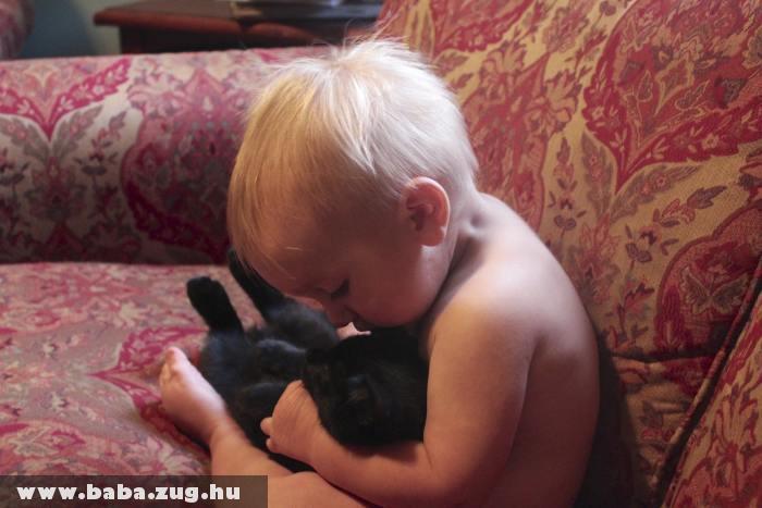 Barátkozás a cicával