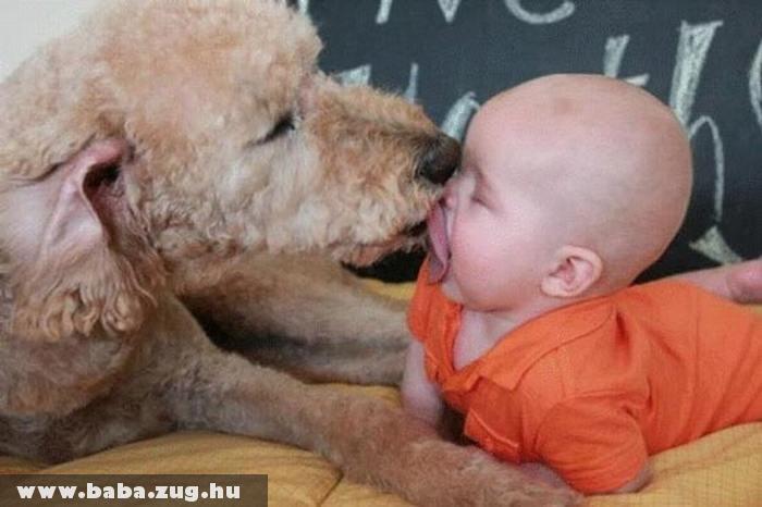 Kutya szeretet