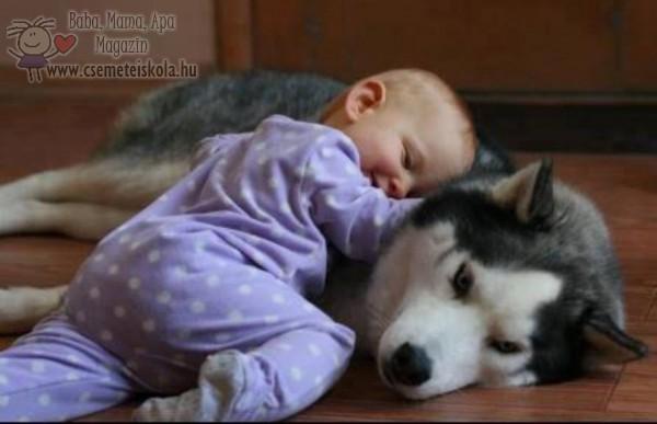 A kutyus oltalma alatt békés pihenés