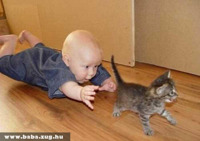 Macskavadászat
