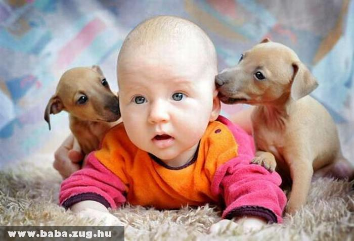 Barátkozás a kutyusokkal
