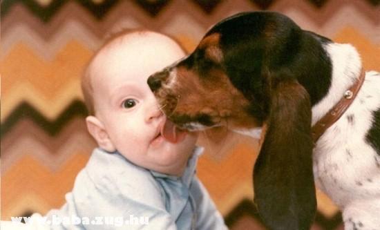 Kutya-baba barátság